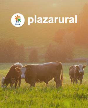 Remate 239 de Plazarural